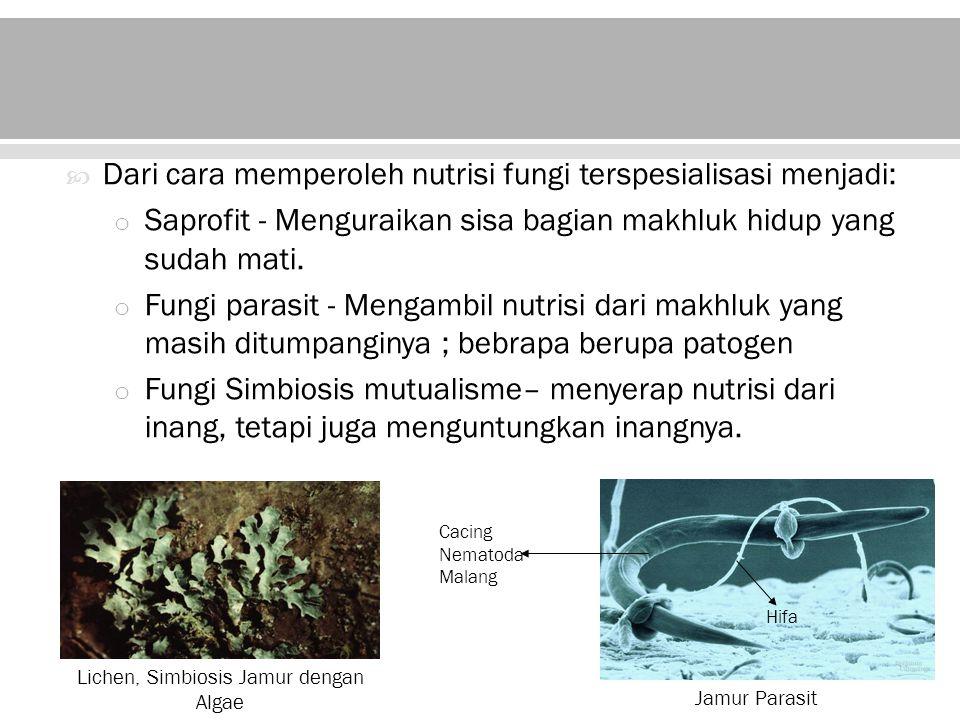 Fungi merupakan dekomposer utama dalam ekosistem –decompose dead leaves, twigs, logs, and animals –Mengembalikan nutrisi-nutrisi kedalam tanah –Dapat menghancurkan struktur pohon buah dan pohon berkayu