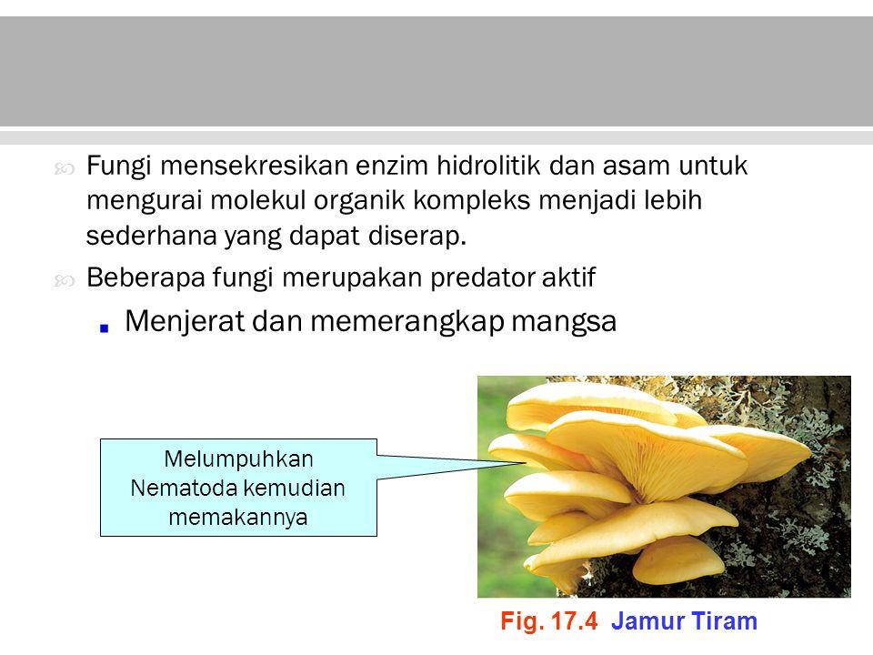 Fungi membutuhkan senyawa-senyawa organik sebagai sumber energinya dan juga untuk biosistesis senyawa- senyawa karbon.