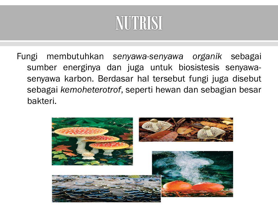  karakter dari fungi berkenaan dengan nutrisinya  bahwa fungi menyerap molekul-molekul organik sederhana terlarut (monosakarida, asam amino, dan senyawa-senyawa organik) melewati dinding dan membran sel.