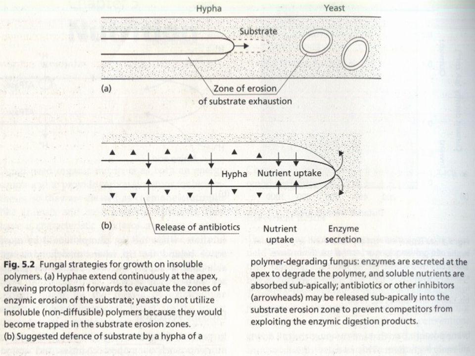 1.Sintesis/pembuatan enzim-enzim depolimerase diatur secara ketat dengan mekanisme kilas balik (feedback mechanisms), sehingga laju produksi enzim seimbang dengan pemecahan produk yang digunakan Organisme lain tak kebagian.