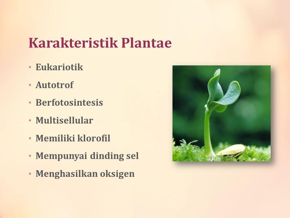 Karakteristik Plantae Eukariotik Autotrof Berfotosintesis Multisellular Memiliki klorofil Mempunyai dinding sel Menghasilkan oksigen