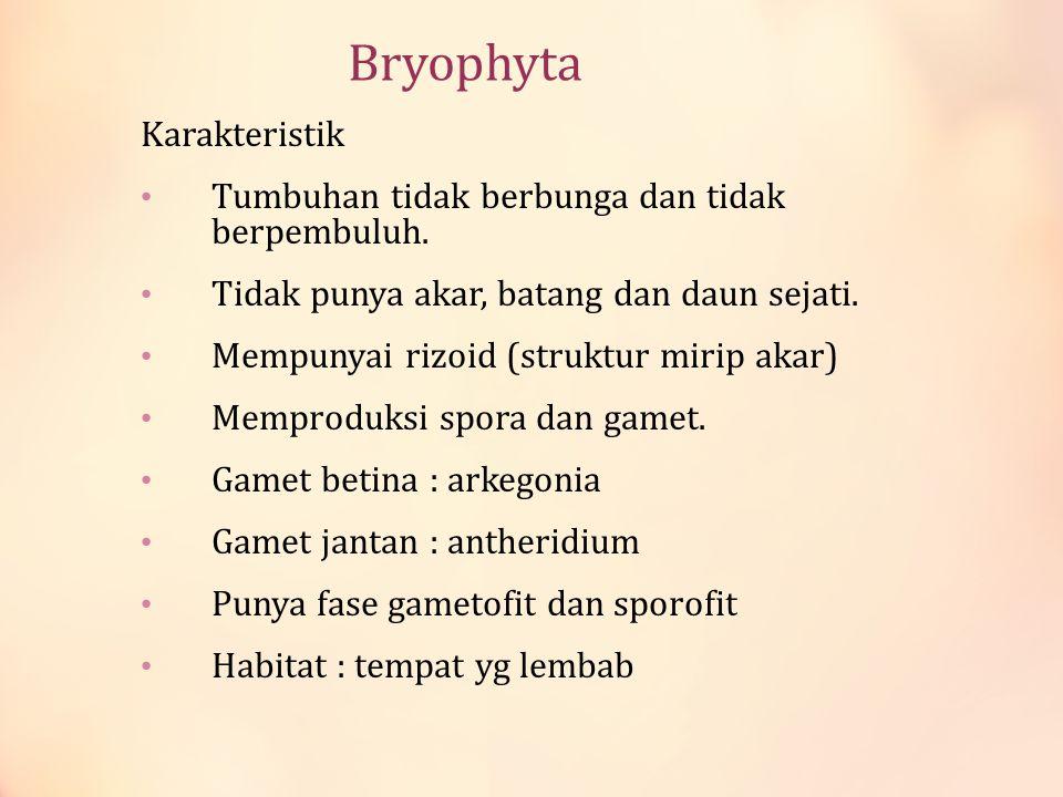 Bryophyta Karakteristik Tumbuhan tidak berbunga dan tidak berpembuluh. Tidak punya akar, batang dan daun sejati. Mempunyai rizoid (struktur mirip akar