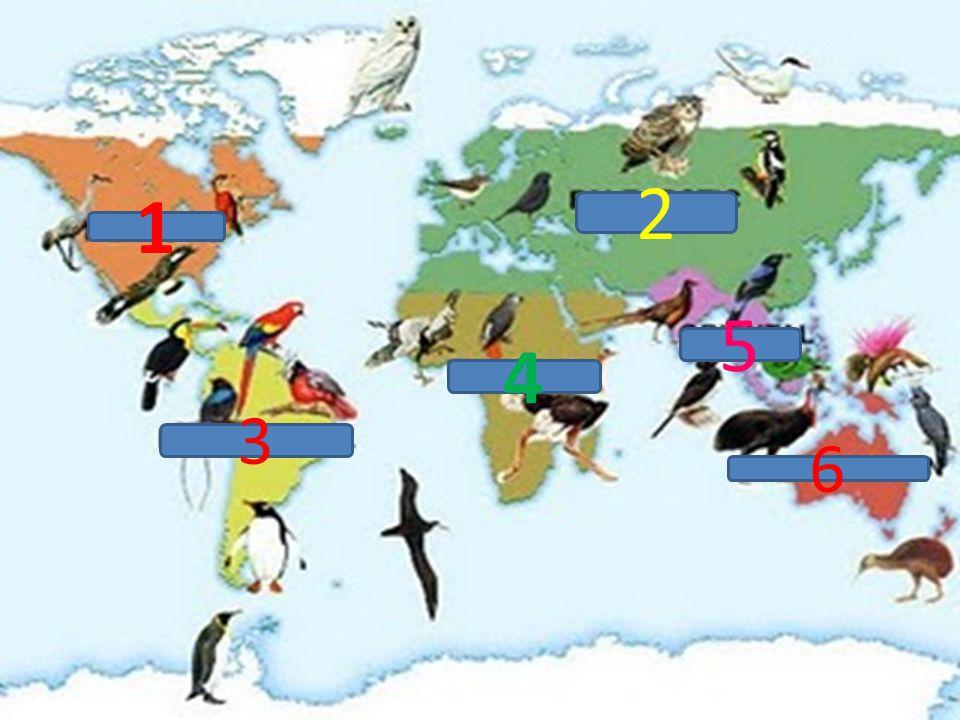 Wilayah Neartik Meliputi hampir seluruh wilayah Amerika Utara dan seluruh daerah Greenland.