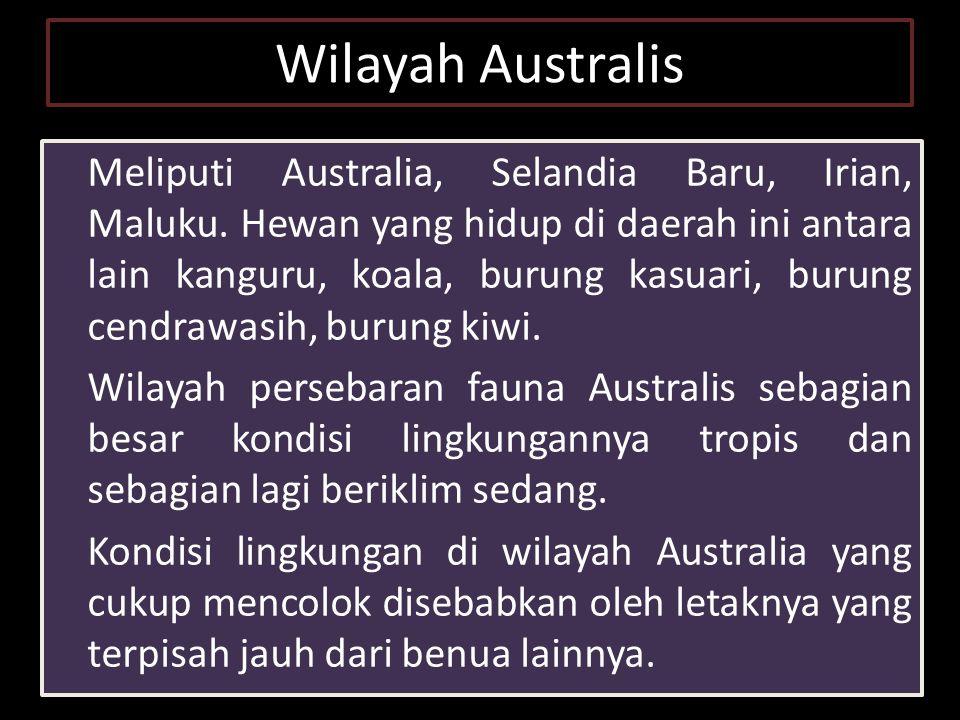 Wilayah Australis Meliputi Australia, Selandia Baru, Irian, Maluku.