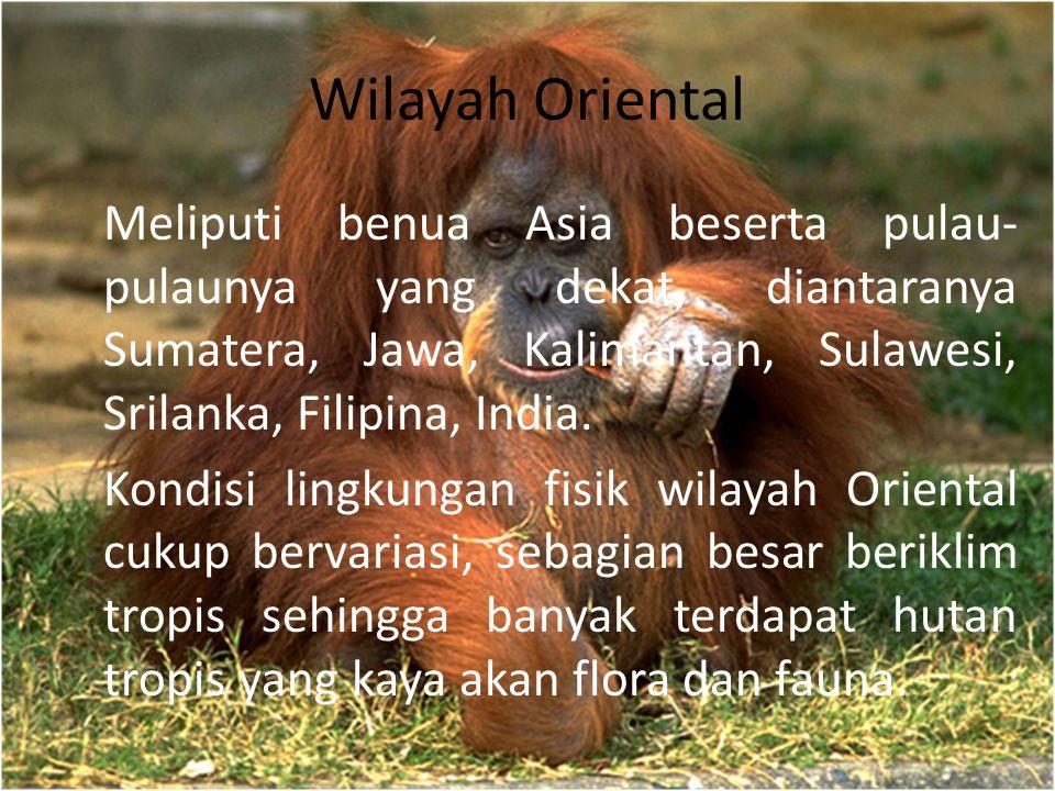 Wilayah Oriental Meliputi benua Asia beserta pulau- pulaunya yang dekat, diantaranya Sumatera, Jawa, Kalimantan, Sulawesi, Srilanka, Filipina, India.