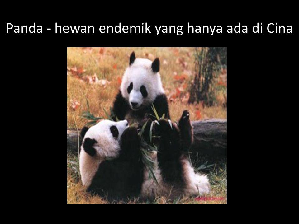 Panda - hewan endemik yang hanya ada di Cina