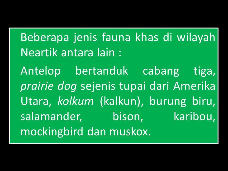 Beberapa jenis fauna khas di wilayah Neartik antara lain : Antelop bertanduk cabang tiga, prairie dog sejenis tupai dari Amerika Utara, kolkum (kalkun), burung biru, salamander, bison, karibou, mockingbird dan muskox.