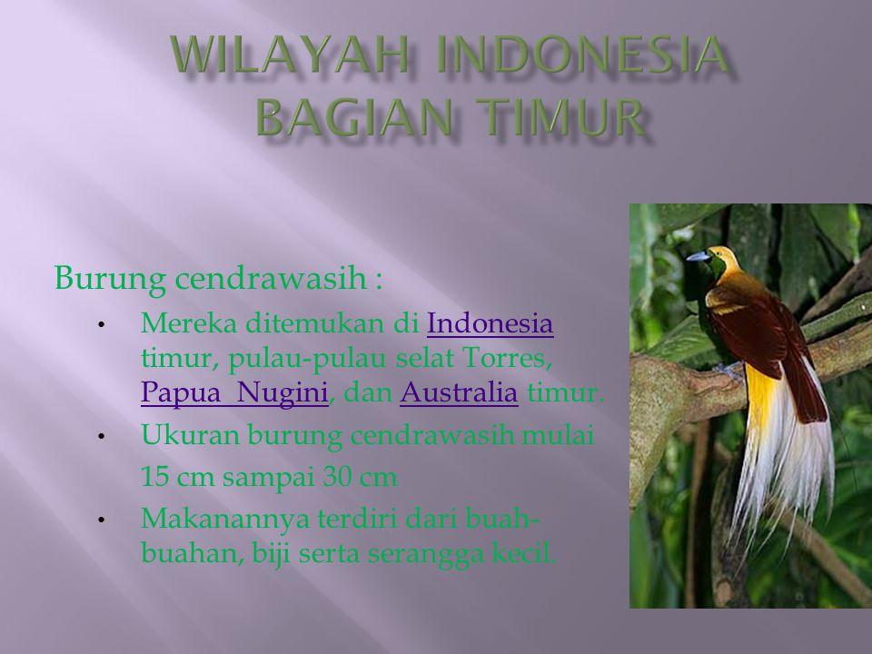 Burung cendrawasih : Mereka ditemukan di Indonesia timur, pulau-pulau selat Torres, Papua Nugini, dan Australia timur.Indonesia Papua NuginiAustralia