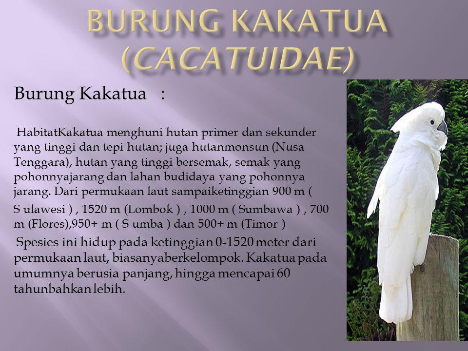 Burung Kakatua : HabitatKakatua menghuni hutan primer dan sekunder yang tinggi dan tepi hutan; juga hutanmonsun (Nusa Tenggara), hutan yang tinggi ber