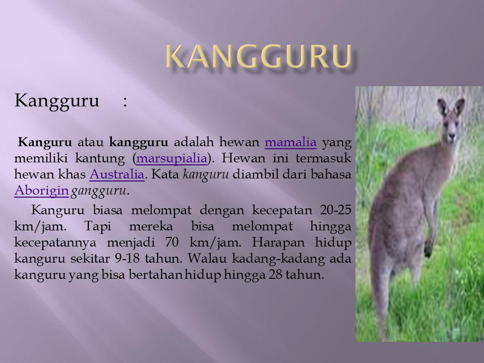 Kangguru : Kanguru atau kangguru adalah hewan mamalia yang memiliki kantung (marsupialia). Hewan ini termasuk hewan khas Australia. Kata kanguru diamb