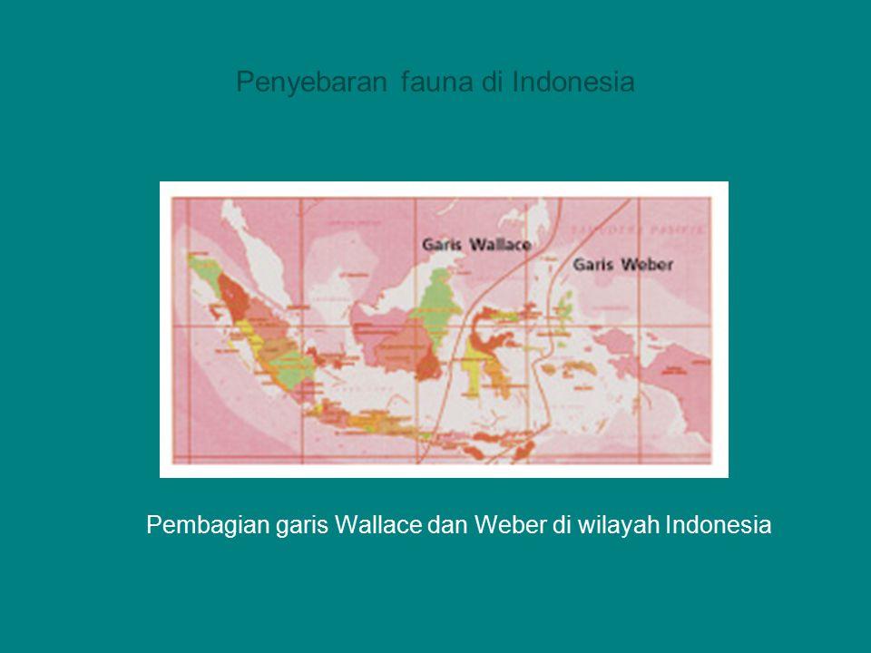 7.Wilayah Oceanik. Fauna di wilayah ini tersebar di kawasan kepulauan di samudera pasifik.