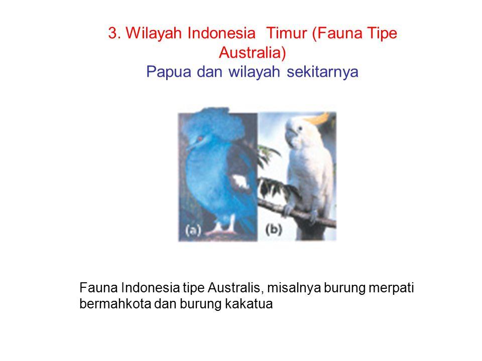 Pembagian Wilayah Fauna di Dunia