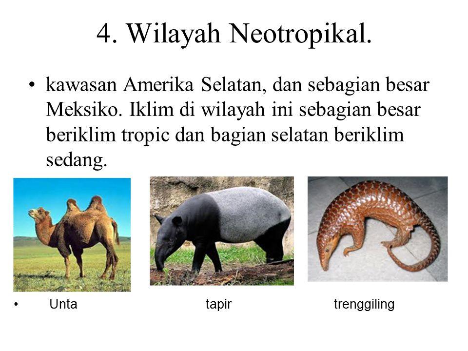 5.Wilayah Oriental Asia Tenggara dan Asia Selatan.