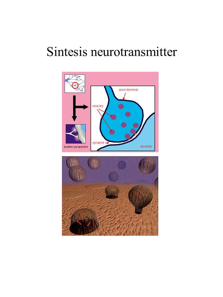Sintesis neurotransmitter