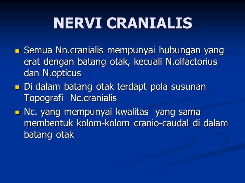 NERVI CRANIALIS Semua Nn.cranialis mempunyai hubungan yang erat dengan batang otak, kecuali N.olfactorius dan N.opticus Semua Nn.cranialis mempunyai h