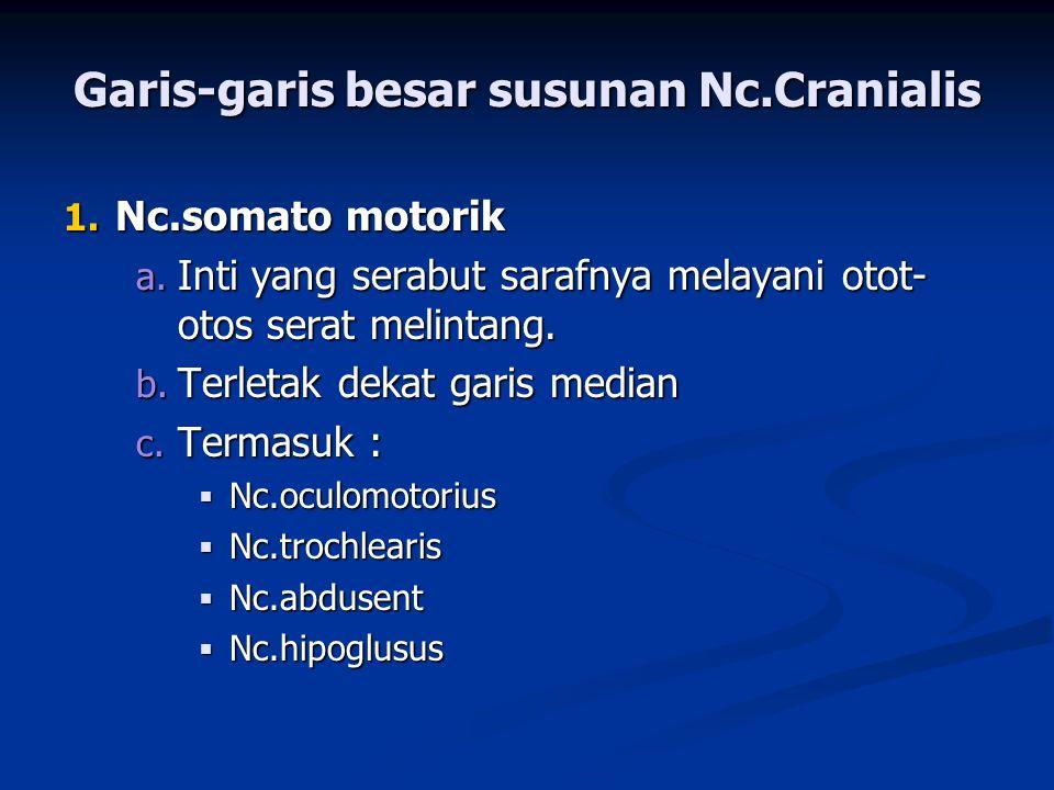 Garis-garis besar susunan Nc.Cranialis 1. Nc.somato motorik a. Inti yang serabut sarafnya melayani otot- otos serat melintang. b. Terletak dekat garis