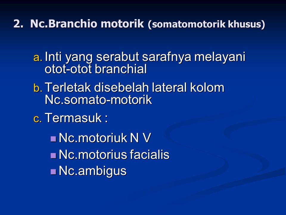 2.Nc.Branchio motorik (somatomotorik khusus) a. Inti yang serabut sarafnya melayani otot-otot branchial b. Terletak disebelah lateral kolom Nc.somato-