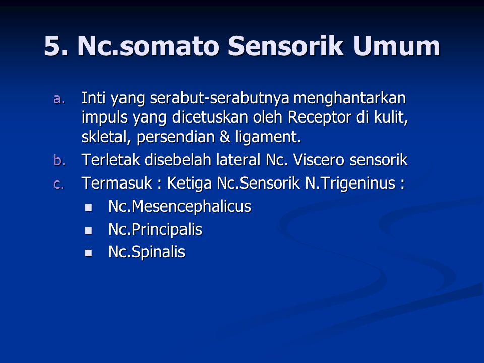 5. Nc.somato Sensorik Umum a. Inti yang serabut-serabutnya menghantarkan impuls yang dicetuskan oleh Receptor di kulit, skletal, persendian & ligament
