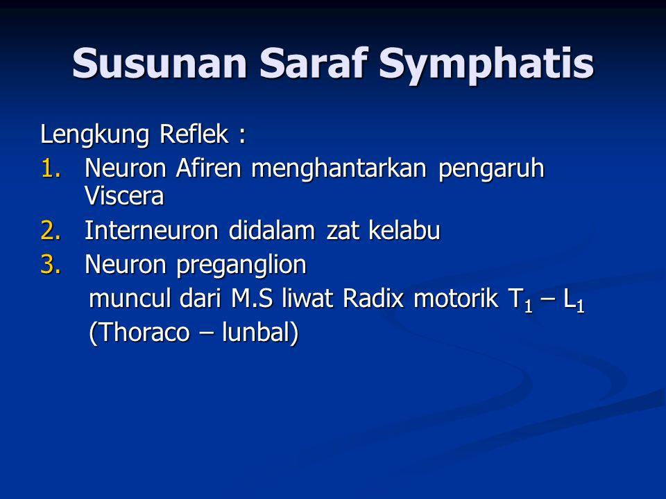 Susunan Saraf Symphatis Lengkung Reflek : 1. Neuron Afiren menghantarkan pengaruh Viscera 2. Interneuron didalam zat kelabu 3. Neuron preganglion munc