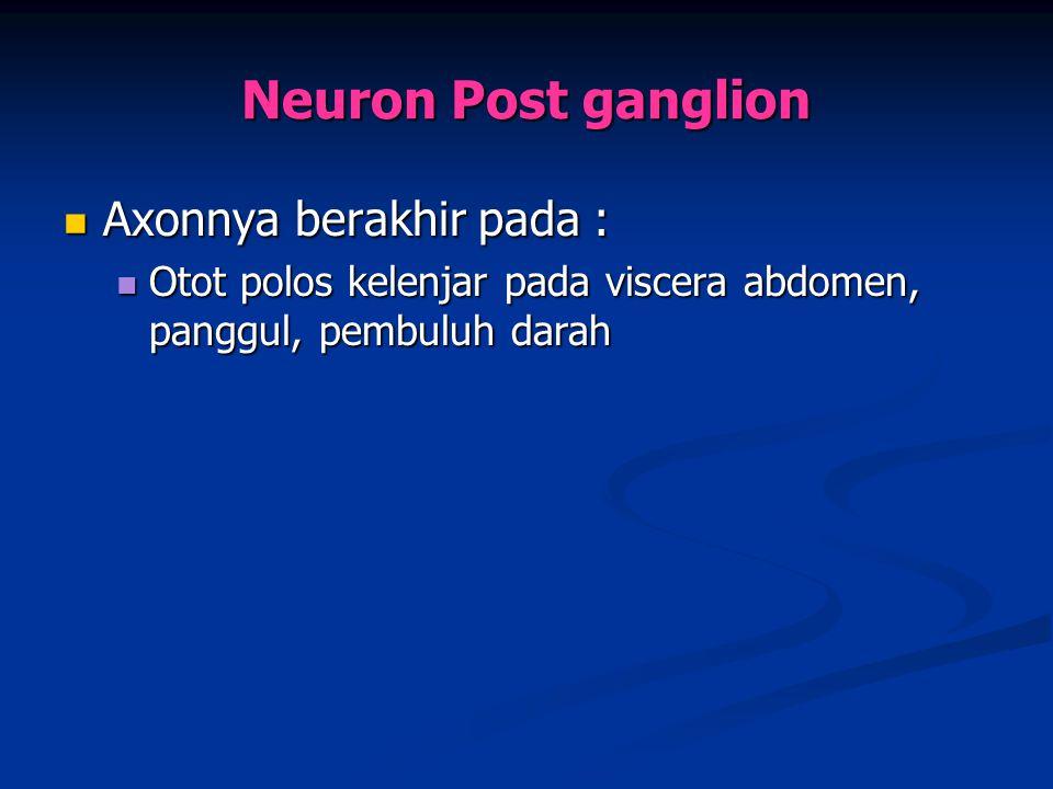 Axonnya berakhir pada : Axonnya berakhir pada : Otot polos kelenjar pada viscera abdomen, panggul, pembuluh darah Otot polos kelenjar pada viscera abd