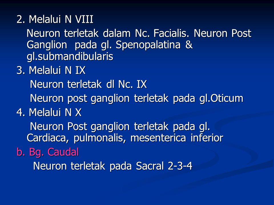 2. Melalui N VIII Neuron terletak dalam Nc. Facialis. Neuron Post Ganglion pada gl. Spenopalatina & gl.submandibularis Neuron terletak dalam Nc. Facia