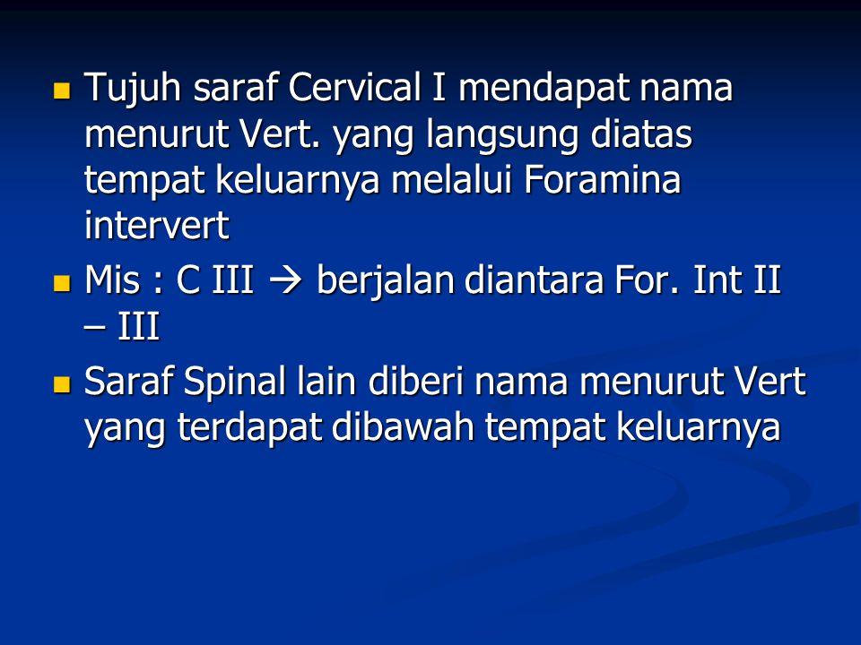 Tujuh saraf Cervical I mendapat nama menurut Vert. yang langsung diatas tempat keluarnya melalui Foramina intervert Tujuh saraf Cervical I mendapat na