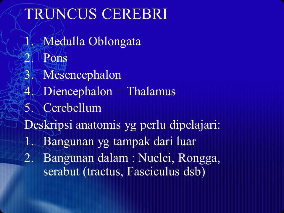 TRUNCUS CEREBRI 1.Medulla Oblongata 2.Pons 3.Mesencephalon 4.Diencephalon = Thalamus 5.Cerebellum Deskripsi anatomis yg perlu dipelajari: 1.Bangunan y
