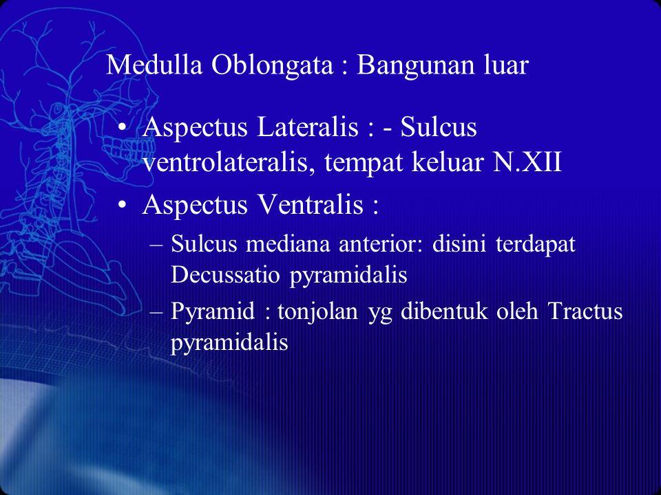 Medulla Oblongata : Bangunan luar Aspectus Lateralis : - Sulcus ventrolateralis, tempat keluar N.XII Aspectus Ventralis : –Sulcus mediana anterior: di