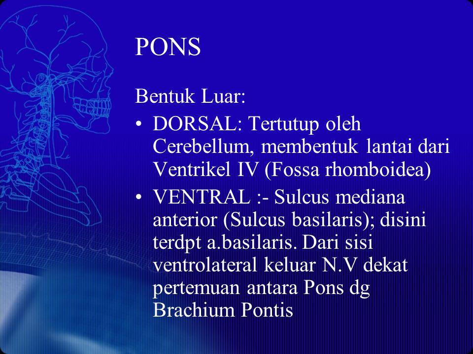 PONS Bentuk Luar: DORSAL: Tertutup oleh Cerebellum, membentuk lantai dari Ventrikel IV (Fossa rhomboidea) VENTRAL :- Sulcus mediana anterior (Sulcus b