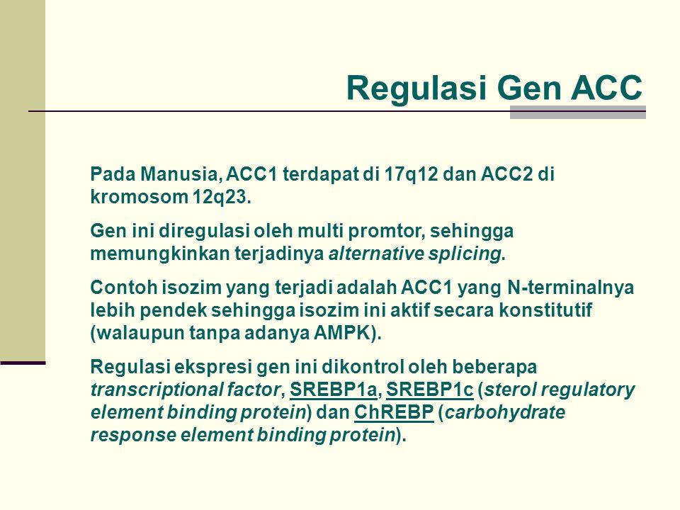 Regulasi Gen ACC Pada Manusia, ACC1 terdapat di 17q12 dan ACC2 di kromosom 12q23. Gen ini diregulasi oleh multi promtor, sehingga memungkinkan terjadi
