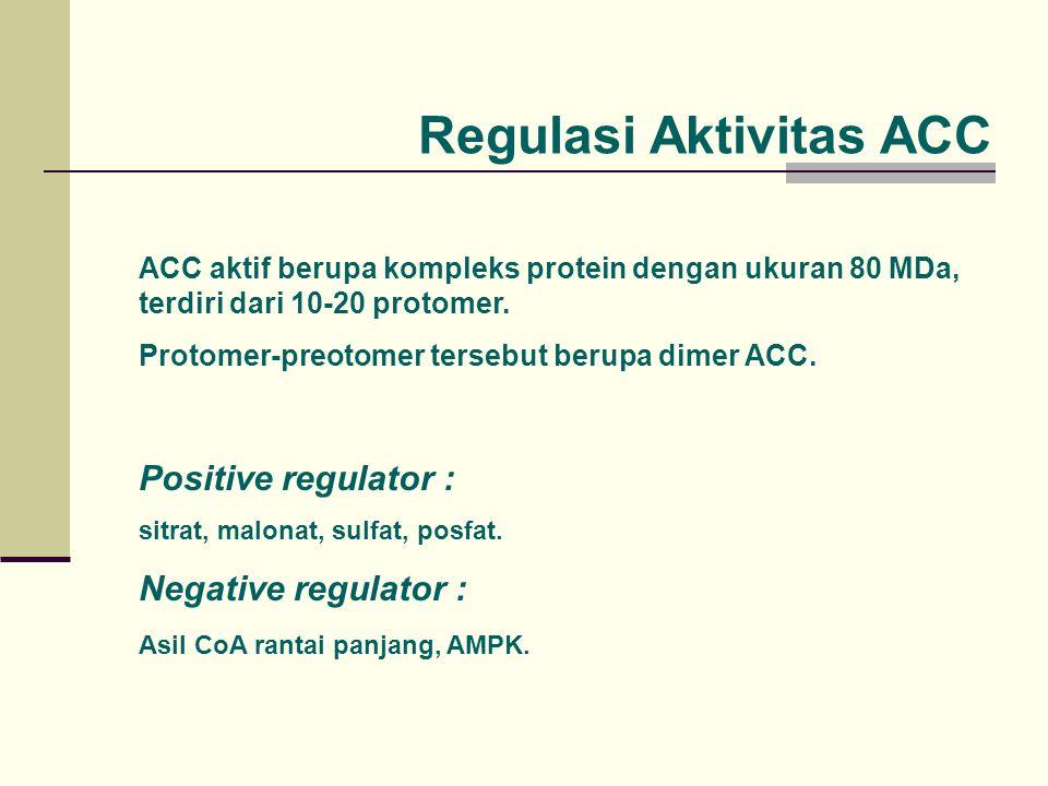 Regulasi Aktivitas ACC ACC aktif berupa kompleks protein dengan ukuran 80 MDa, terdiri dari 10-20 protomer. Protomer-preotomer tersebut berupa dimer A