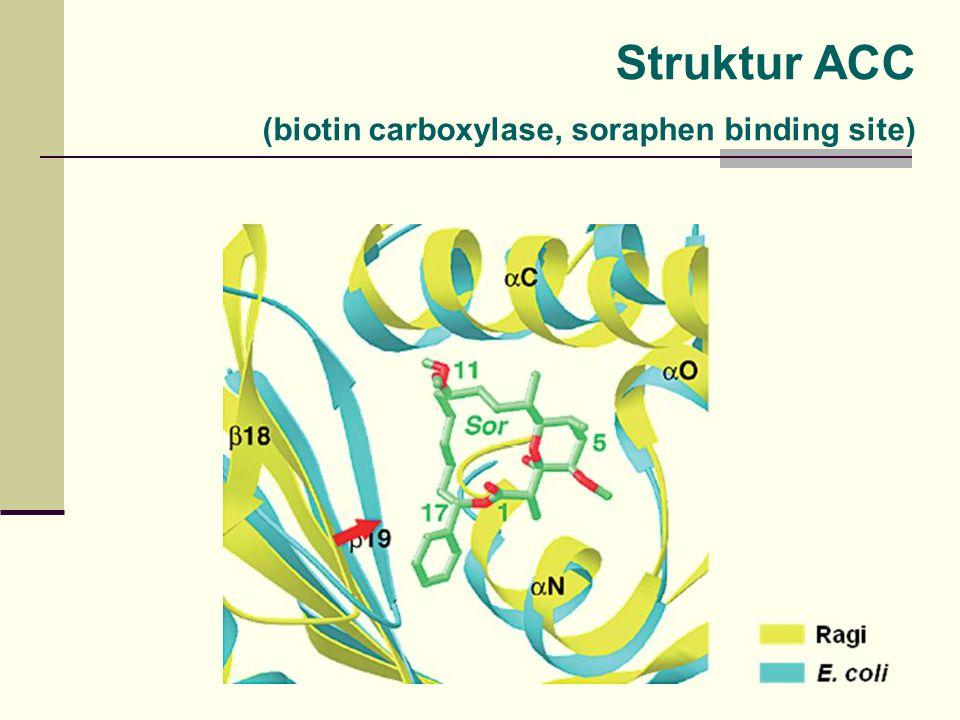 Struktur ACC (biotin carboxylase, soraphen binding site)