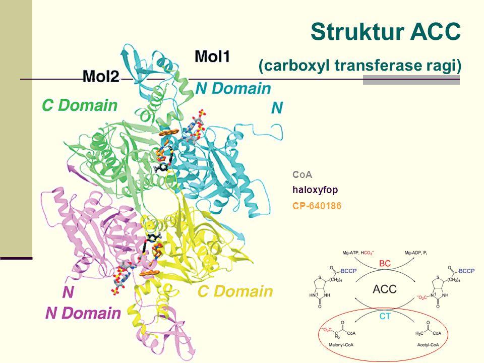 Struktur ACC (carboxyl transferase ragi) CoA haloxyfop CP-640186