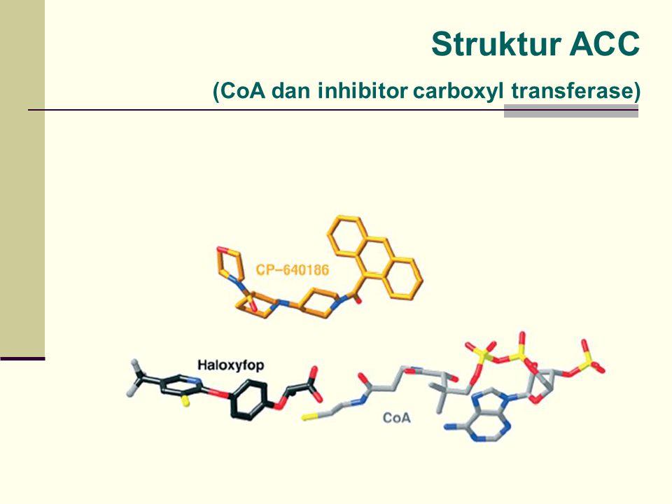 Struktur ACC (CoA dan inhibitor carboxyl transferase)