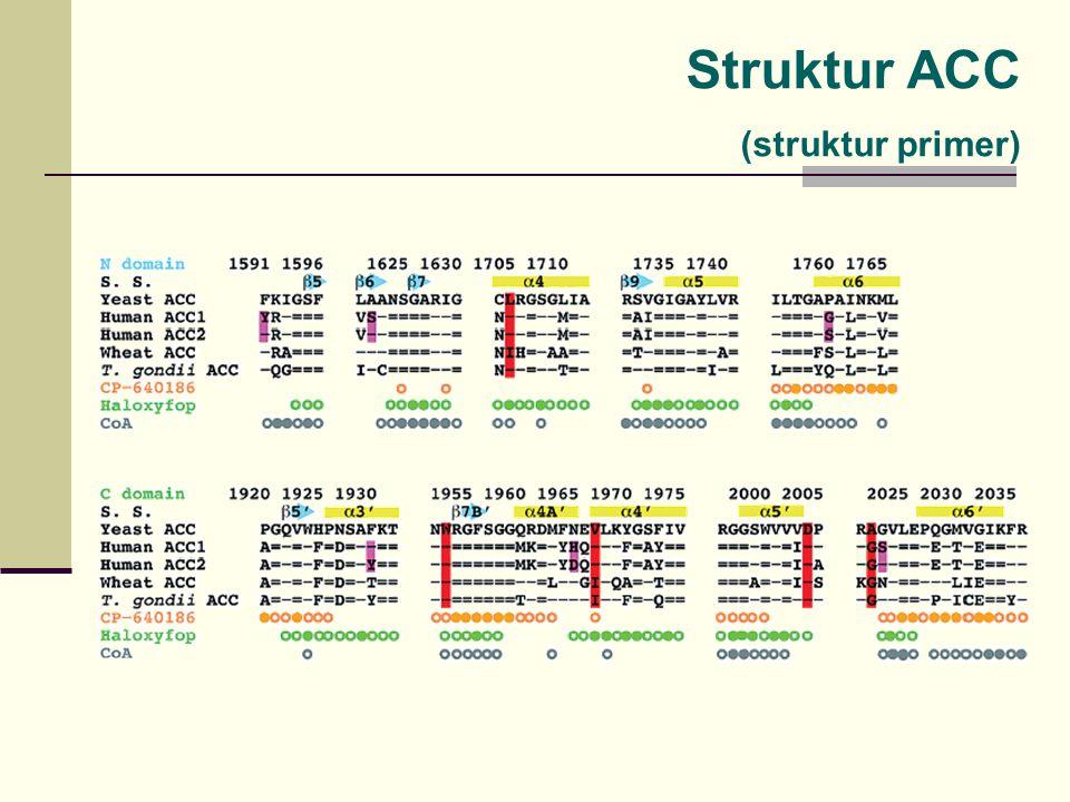 Struktur ACC (struktur primer)