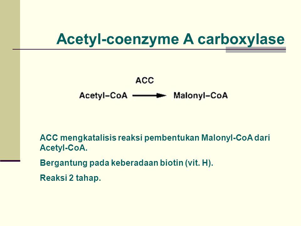 Acetyl-coenzyme A carboxylase ACC mengkatalisis reaksi pembentukan Malonyl-CoA dari Acetyl-CoA. Bergantung pada keberadaan biotin (vit. H). Reaksi 2 t