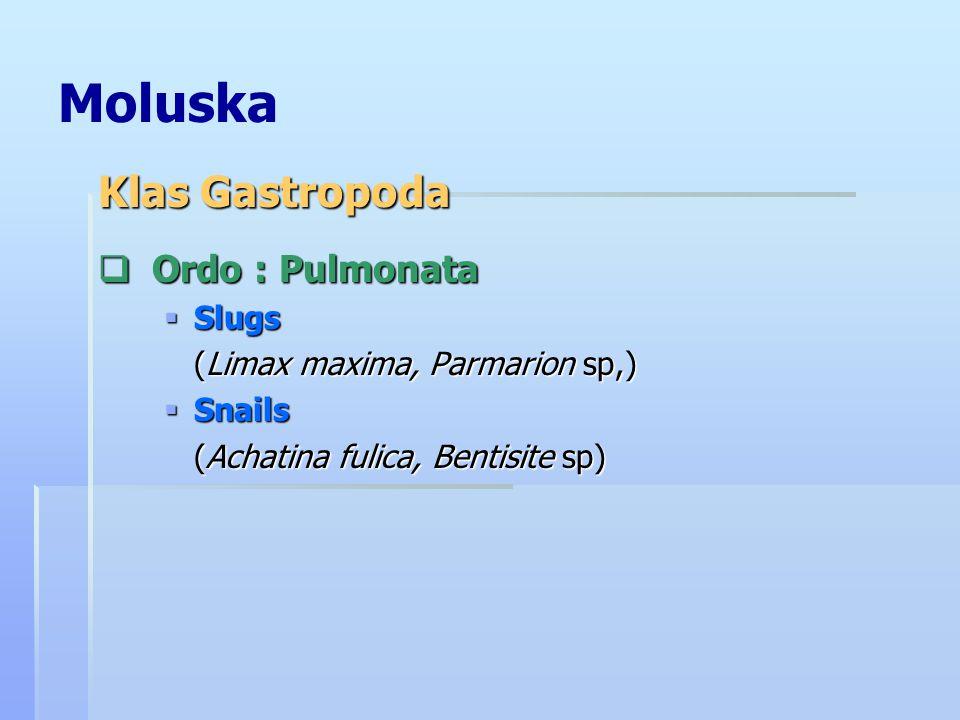 Moluska  Ordo : Pulmonata  Slugs (Limax maxima, Parmarion sp,)  Snails (Achatina fulica, Bentisite sp) Klas Gastropoda
