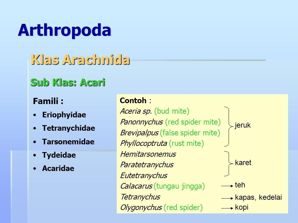 Arthropoda Sub Klas: Acari Famili : Eriophyidae Tetranychidae Tarsonemidae Tydeidae Acaridae Klas Arachnida Contoh : Aceria sp. (bud mite) Panonnychus