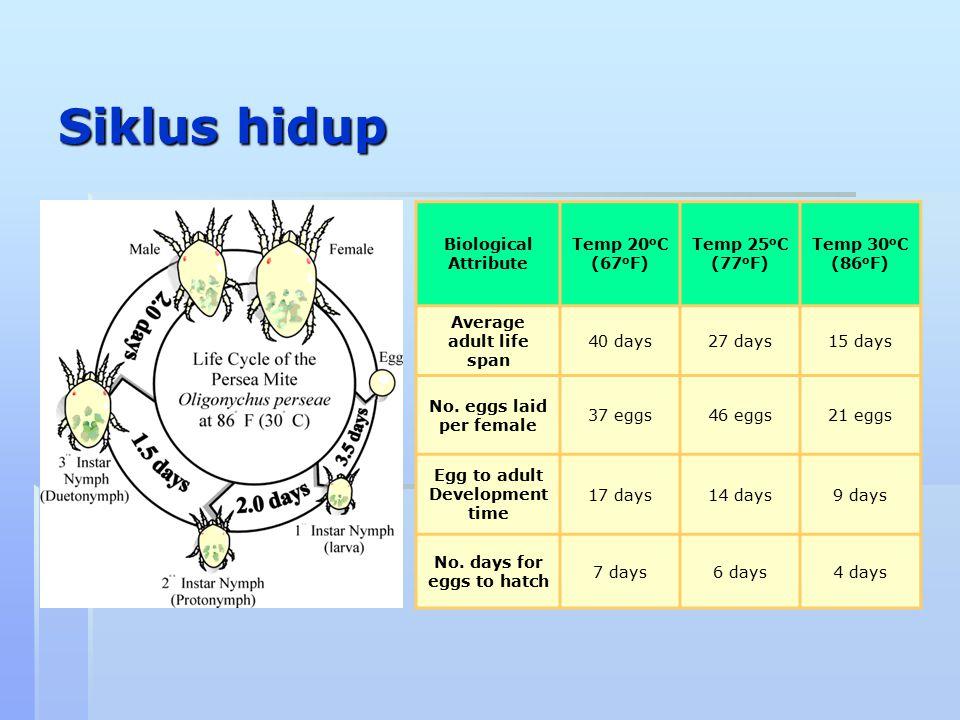 Siklus hidup Biological Attribute Temp 20 o C (67 o F) Temp 25 o C (77 o F) Temp 30 o C (86 o F) Average adult life span 40 days27 days15 days No. egg