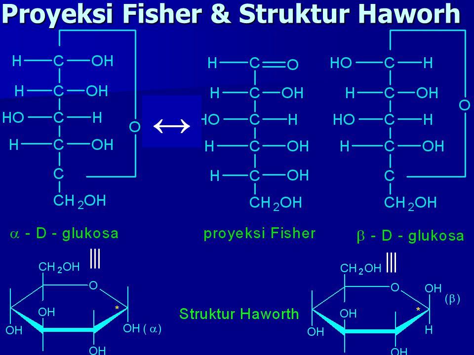 Proyeksi Fisher & Struktur Haworh ↔