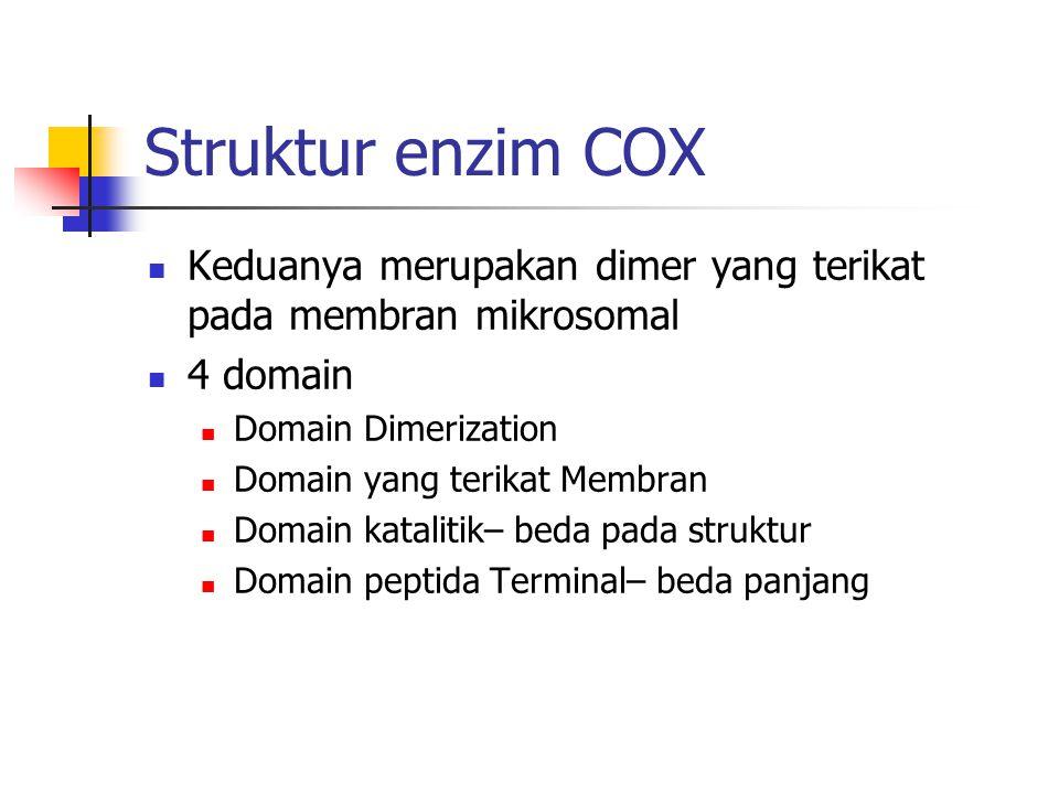 Struktur enzim COX Keduanya merupakan dimer yang terikat pada membran mikrosomal 4 domain Domain Dimerization Domain yang terikat Membran Domain katal