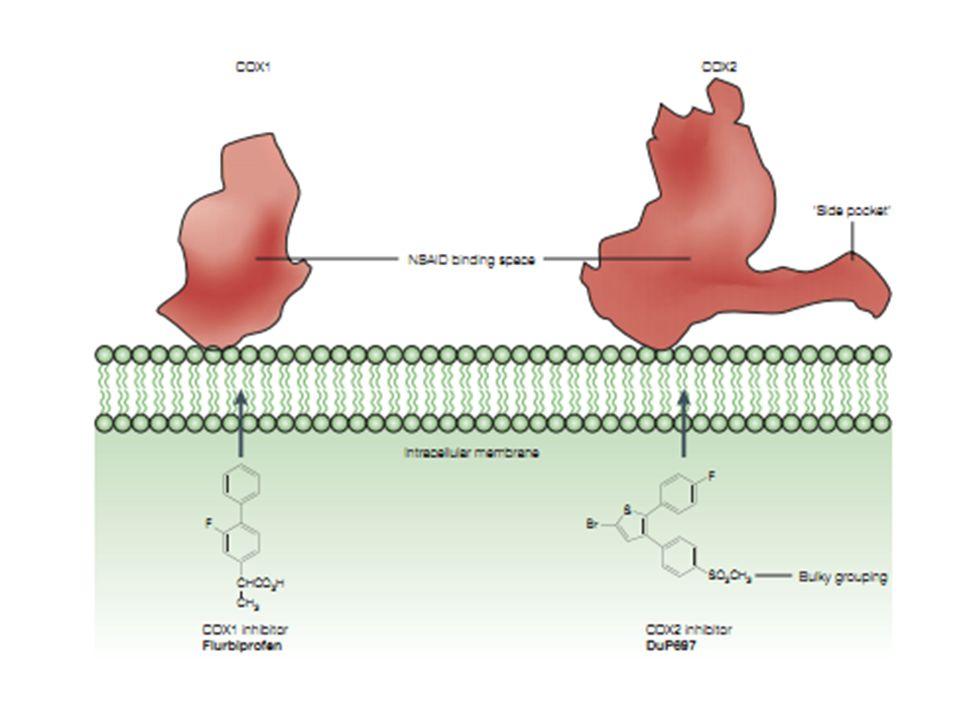 Glucuronide Conjugation UDP-Glucuronosyl Transferase (UGT) Acyl-glucuronide metabolite Drugs (NSAIDs) + UDP