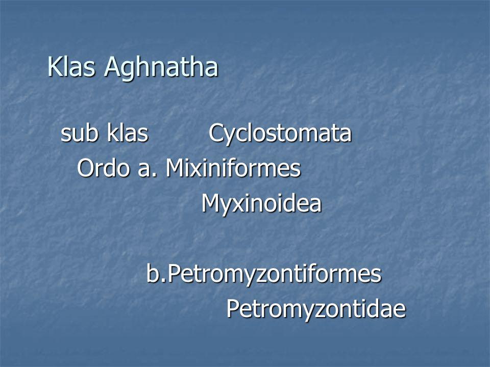 Klas Aghnatha sub klas Cyclostomata sub klas Cyclostomata Ordo a. Mixiniformes Ordo a. MixiniformesMyxinoidea b.Petromyzontiformes b.Petromyzontiforme