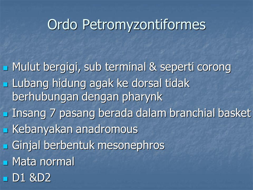 Ordo Petromyzontiformes Mulut bergigi, sub terminal & seperti corong Mulut bergigi, sub terminal & seperti corong Lubang hidung agak ke dorsal tidak b