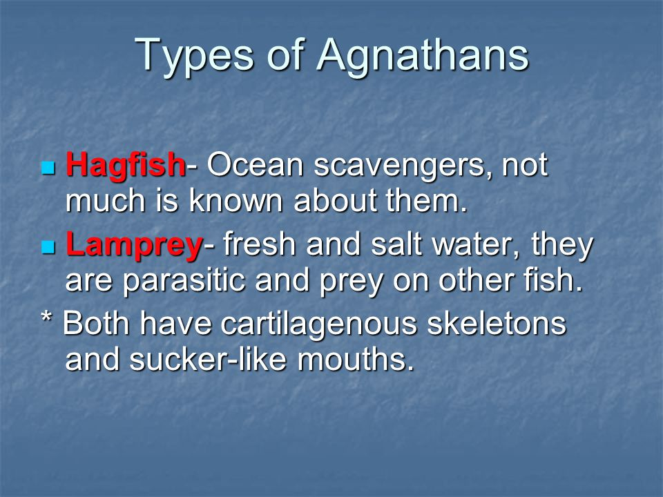 Types of Agnathans Hagfish- Ocean scavengers, not much is known about them. Hagfish- Ocean scavengers, not much is known about them. Lamprey- fresh an
