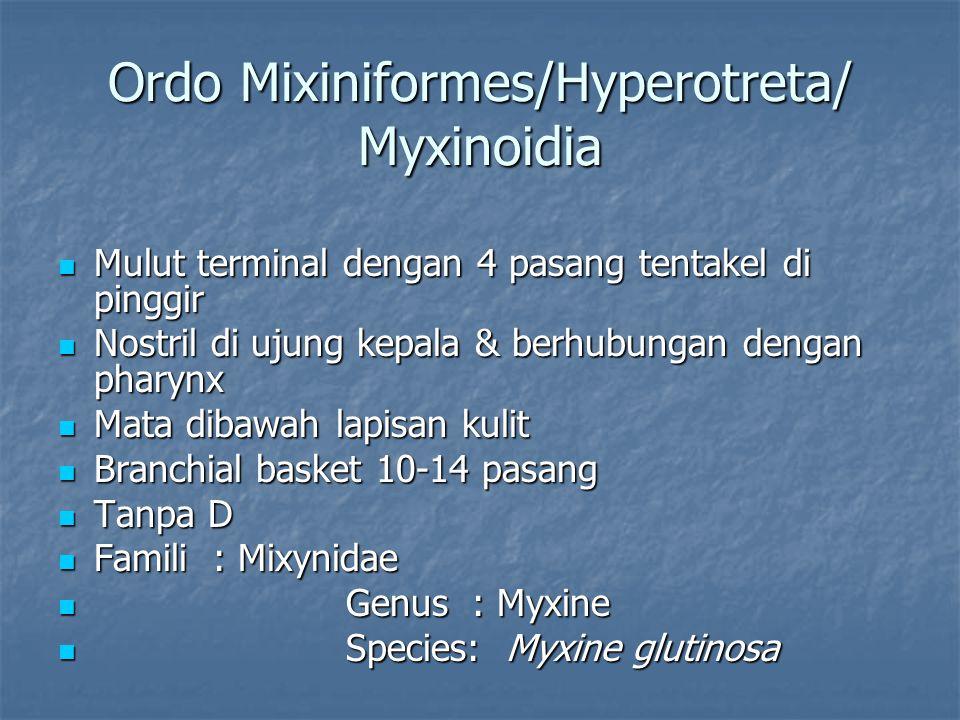 Ordo Mixiniformes/Hyperotreta/ Myxinoidia Mulut terminal dengan 4 pasang tentakel di pinggir Mulut terminal dengan 4 pasang tentakel di pinggir Nostri