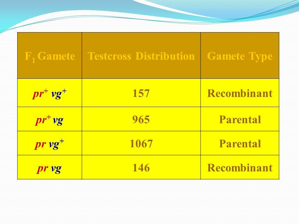 F 1 GameteTestcross DistributionGamete Type pr + vg + 157Recombinant pr + vg965Parental pr vg + 1067Parental pr vg146Recombinant
