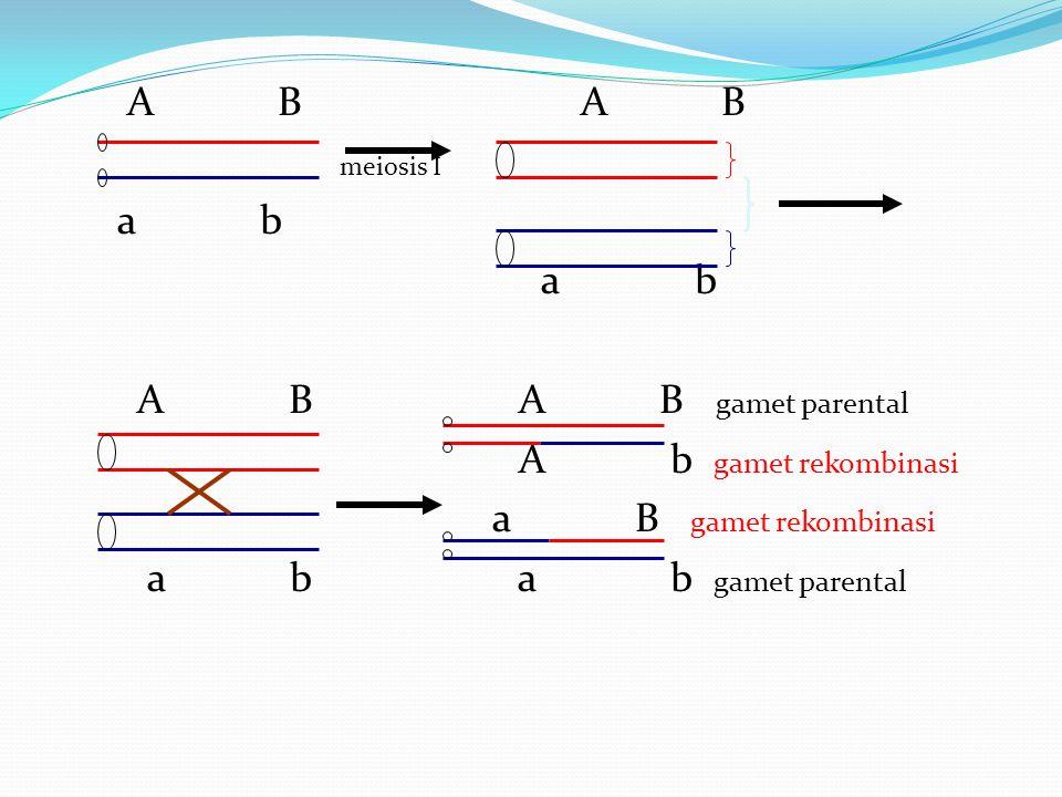 A B A B meiosis I a b A B A B gamet parental A b gamet rekombinasi a B gamet rekombinasi a b a b gamet parental