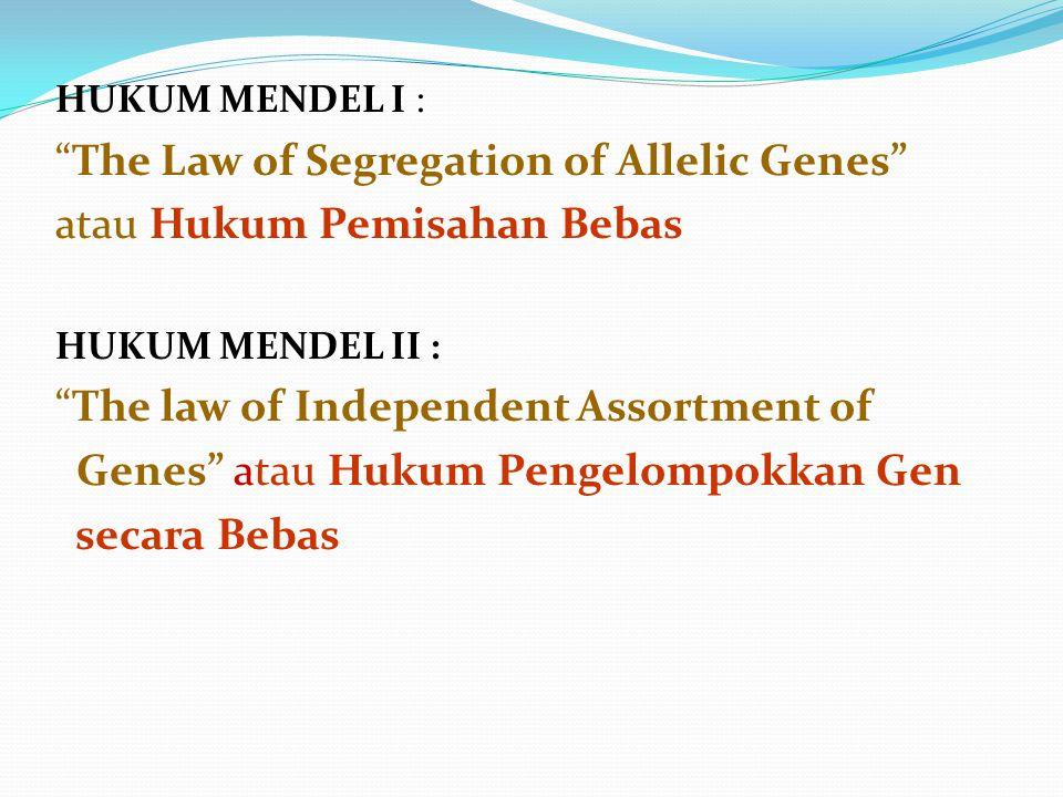 """HUKUM MENDEL I : """"The Law of Segregation of Allelic Genes"""" atau Hukum Pemisahan Bebas HUKUM MENDEL II : """"The law of Independent Assortment of Genes"""" a"""