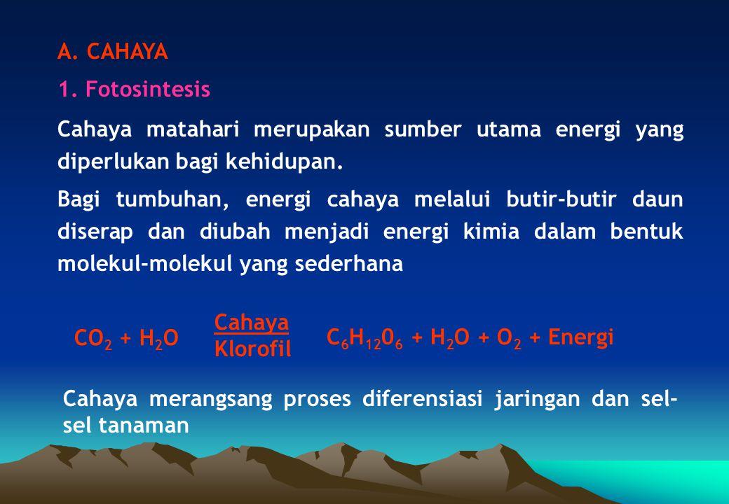 A. CAHAYA 1. Fotosintesis Cahaya matahari merupakan sumber utama energi yang diperlukan bagi kehidupan. Bagi tumbuhan, energi cahaya melalui butir-but